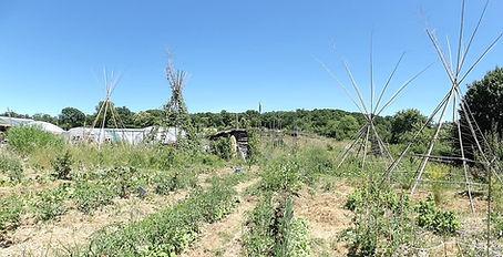 Le potager en pleine production