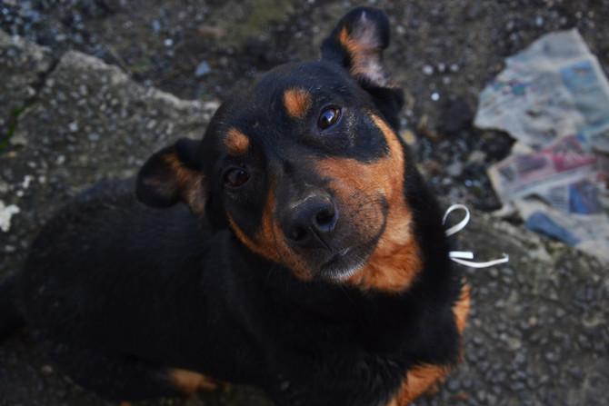 Feira de Adoção Animal acontece neste sábado na Cooperouro