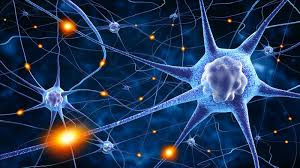 How Do We Increase Our Brain's Neuroplasticity And Why Do We Need To?