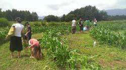 1 Corn Maze Planting.jpg