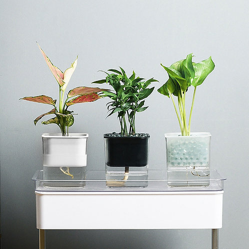 Crystal Clear Pots - Self watering acrylic planters