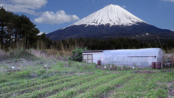 mint farm w fuji. 600w.   .jpg
