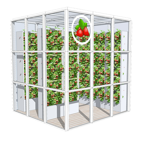 STRAWBERRY CUBE - GREENHOUSE