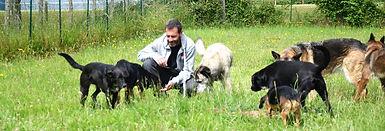 Educateur canin Caen. Dressage chien Caen