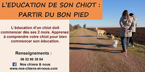 éducation du chiot formation stage