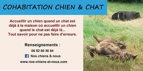 cien et chat cohabitation stage fomation