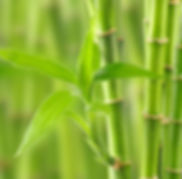Bambus-oly5-Fotoliaid43297612.jpg