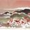 Thumbnail: Postkarte Mohn