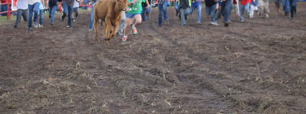 2018 Calf Scramble