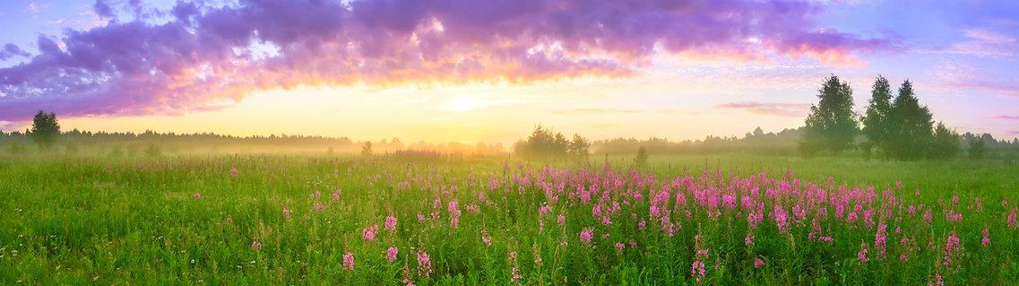 PC website-summer banner-wildflowers.JPG