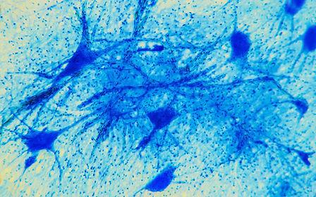 Science background- neuron tissue. Nerve