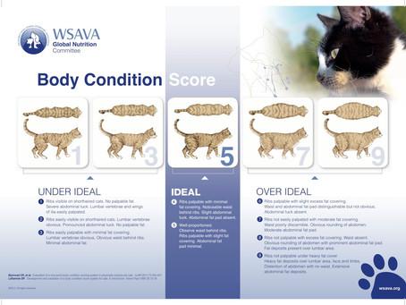 השמנה בחיות מחמד
