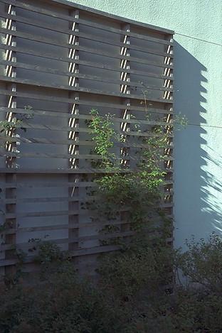 Wall trellis detail