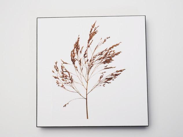 Holzbild 15x15cm  Kunstdruck auf schwarz durchfärbtem MDF. Zum hinhängen und hinstellen!  29€  Artikelnr: 2023 Bestellung per Kontaktformular