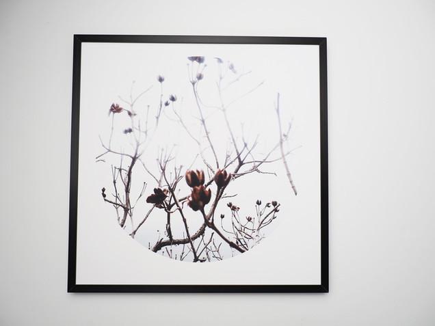 Kunstdruck 32x32cm inkl. schwarzem Aluminium-Bilderrahmen.  49€  Artikelnr: 4012 Bestellung per Kontaktformular