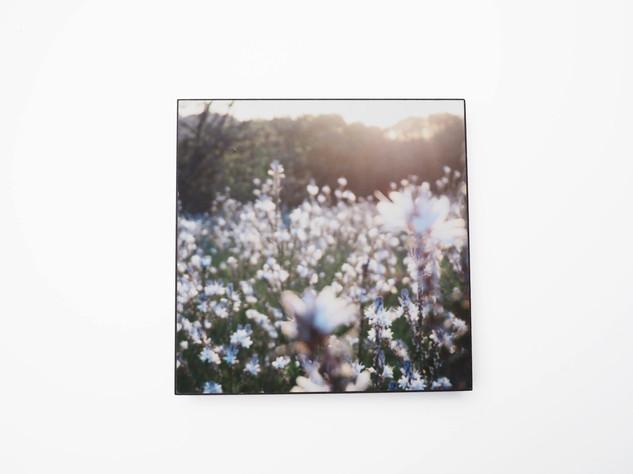Holzbild 15x15cm  Kunstdruck auf schwarz durchfärbtem MDF. Zum hinhängen und hinstellen!  29€  Artikelnr: 2010 Bestellung per Kontaktformular