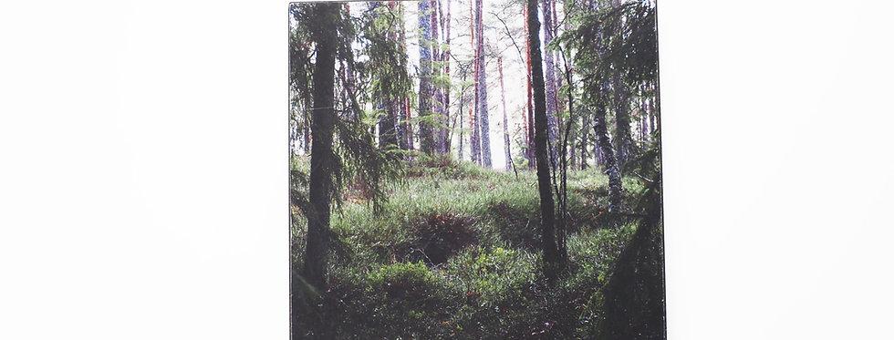 holzbild . green forest