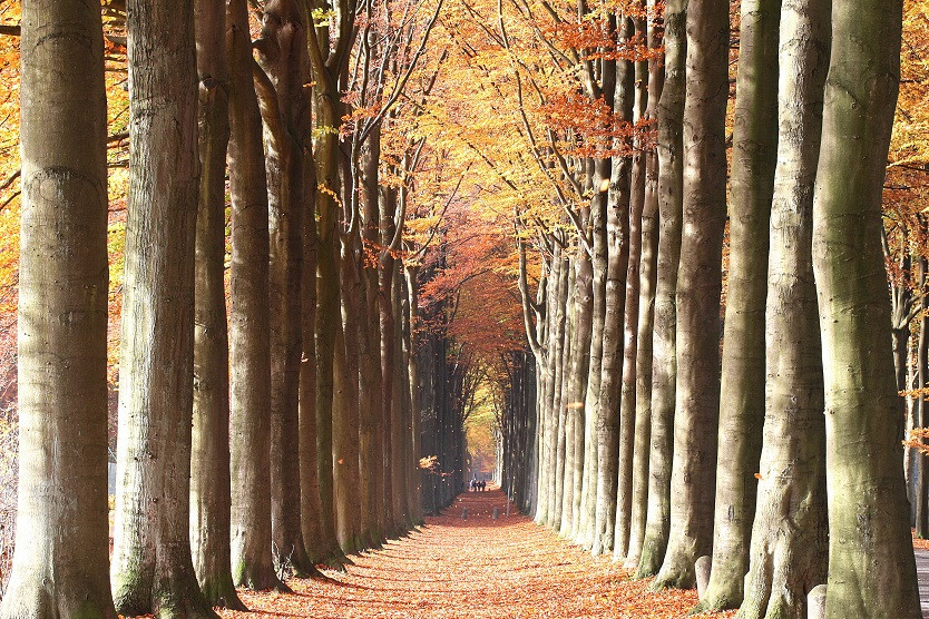 A lasting calm road to travel, held together by large trees. This is the road you want a calm,  sturdy, and lasting road