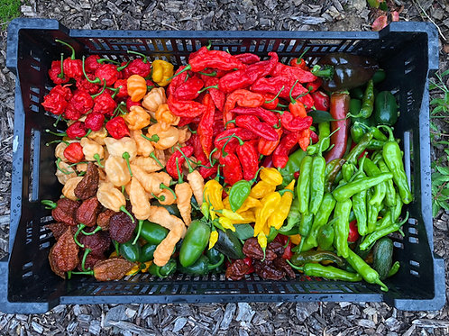 Small Flat-Rate Box O' Peppers