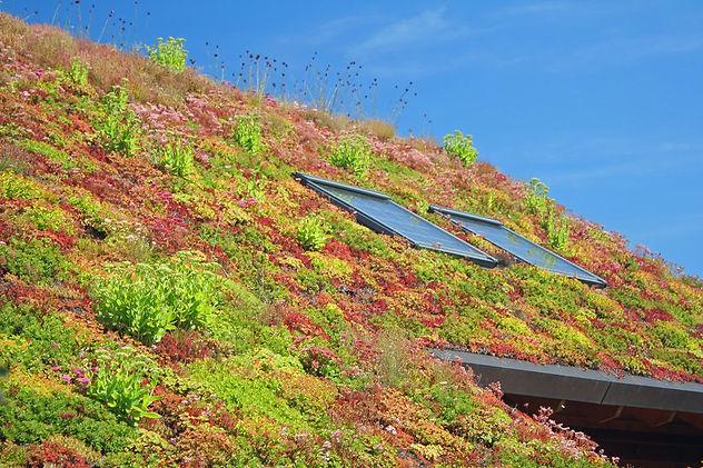 Création toit végétal Pau Béarn