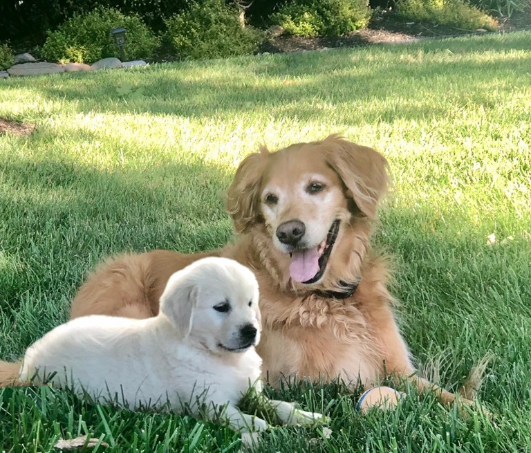Our furry kids... Wilson & Dany