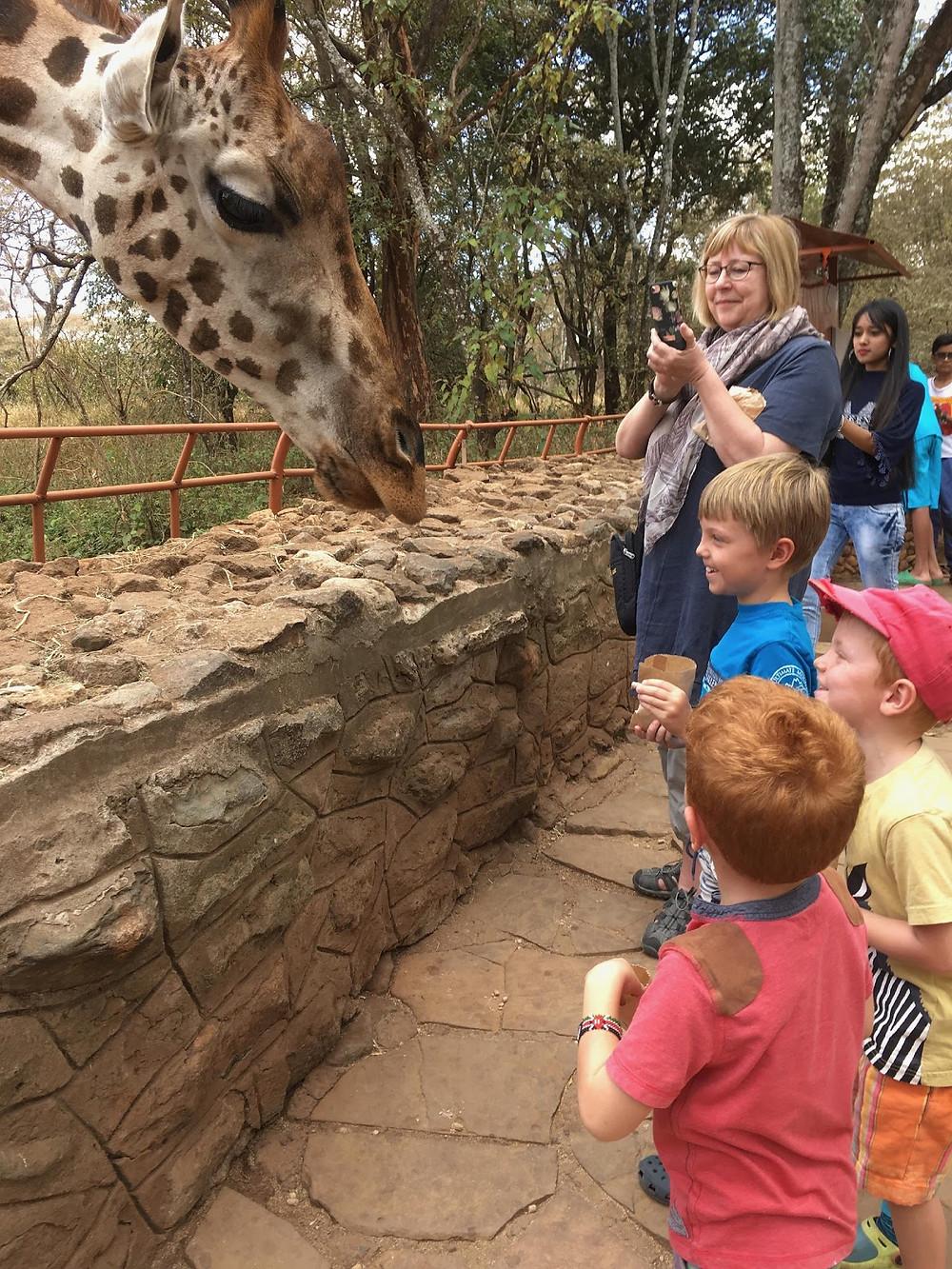 The Giraffe Sanctuary