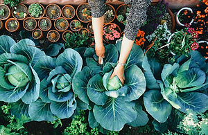 Vegetable%20Garden_edited.jpg