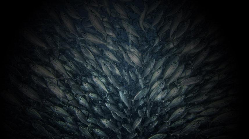 Seafood Page Horizontal Banner 01 2020.1
