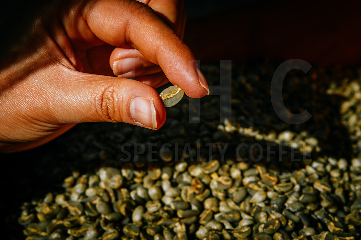 Hand Pick Coffee Beans