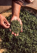 Tea Page Photos Story-3-Web-Size-12-Fuya