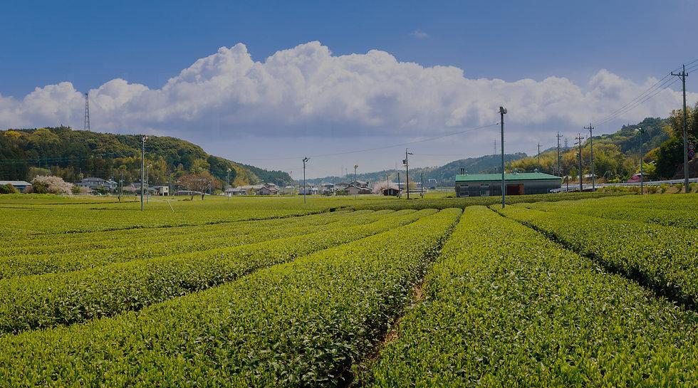 Tea Page Horizontal Banner 01 2020.10.03