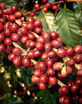 Coffee Page Photo IMG_102_9186 2019.08.1