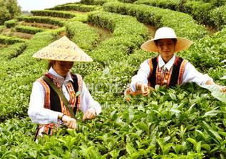 Tea Page Photo 01_p.JPG