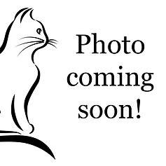 Photo-Coming-Soon-1_edited.jpg