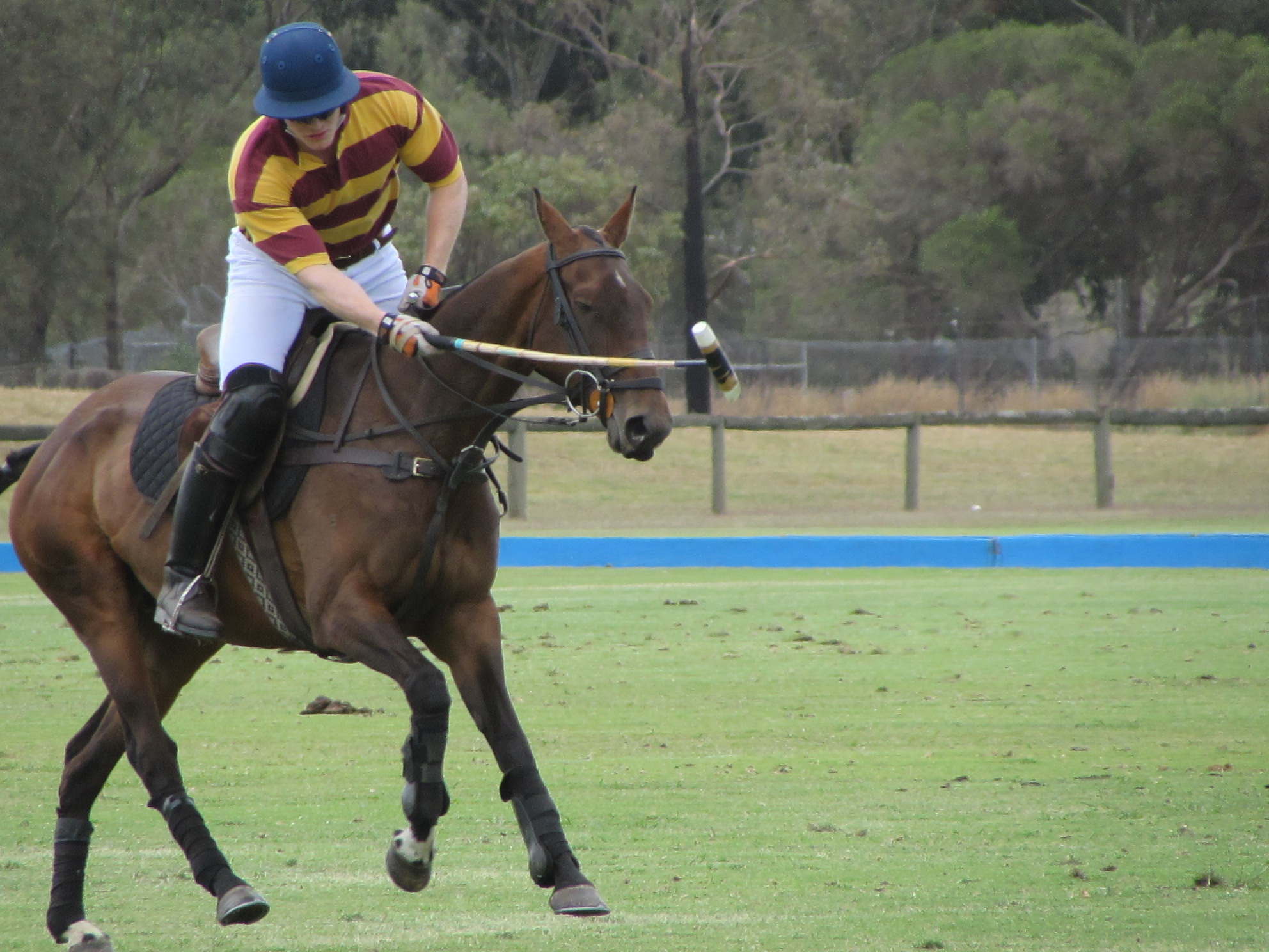 Hexham Polo Club - McArthur