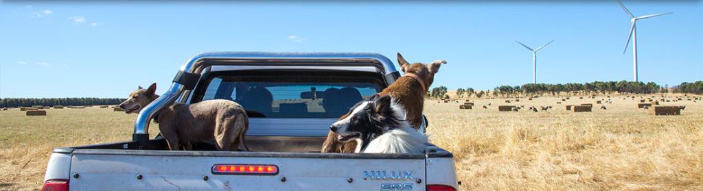 Glenthompson-dogs-banner-1024x279.jpg
