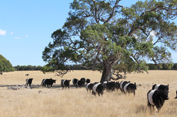 GPC Belties and the Gum