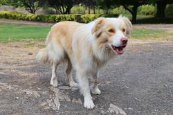 dog-at-Larra.jpg