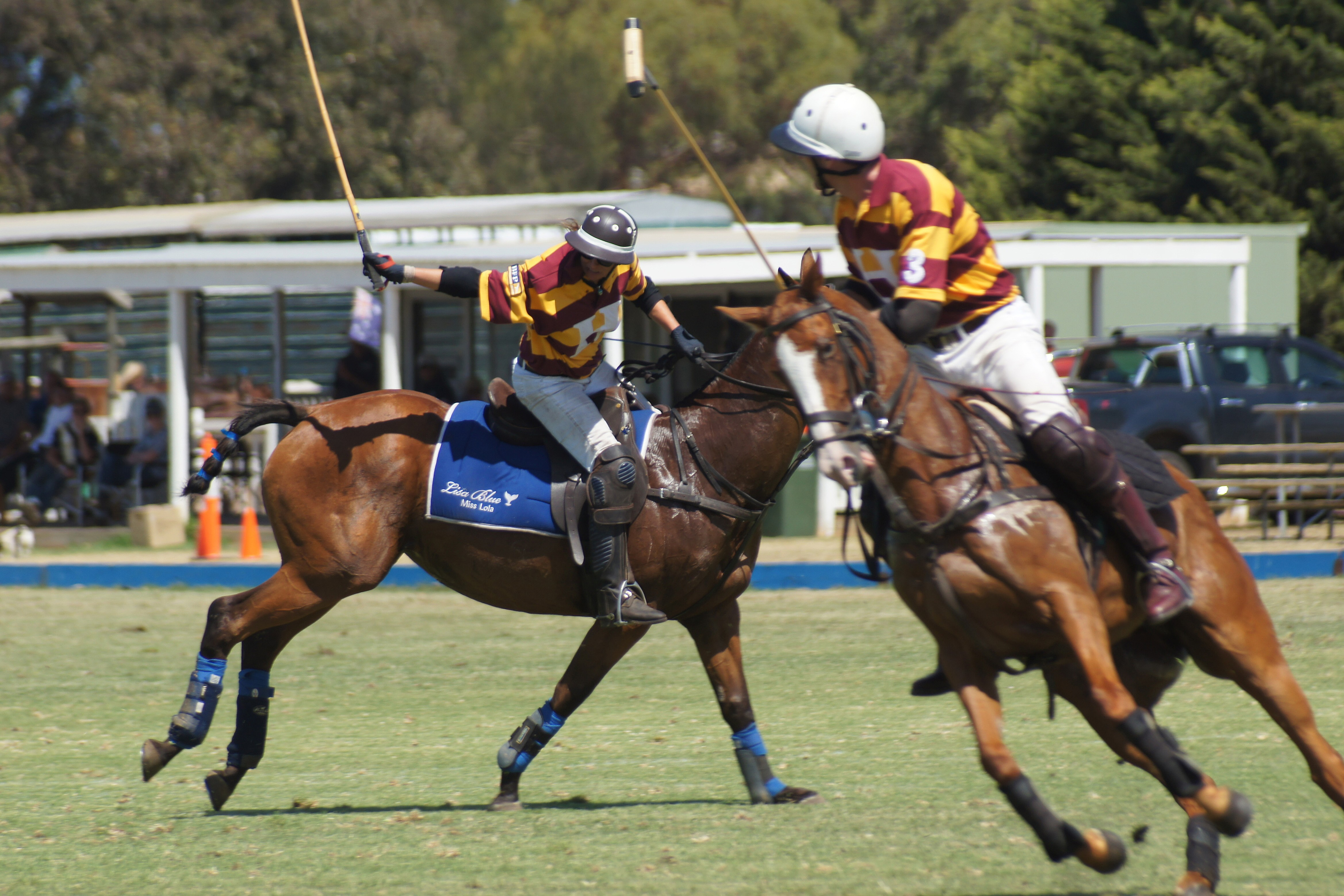 Hexham Polo Club - Tail Shot