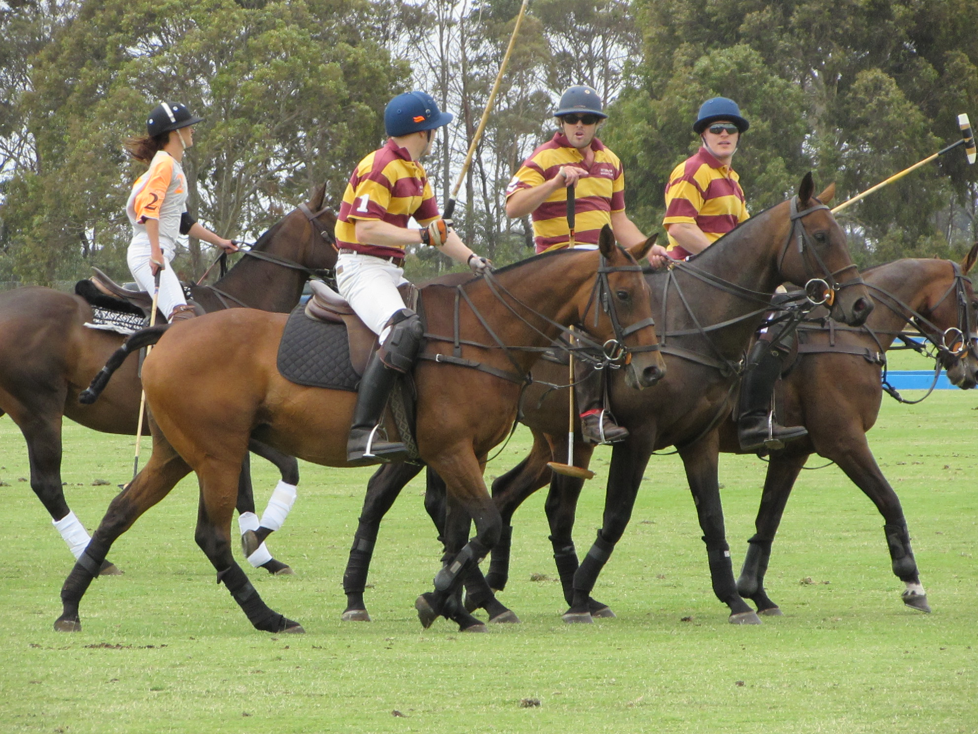 Hexham Polo Club - C Grade 2014