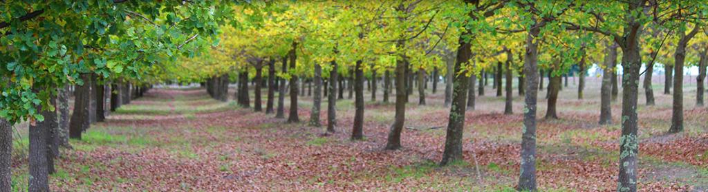 Glenthompson-banner-horticulture-1024x279.jpg