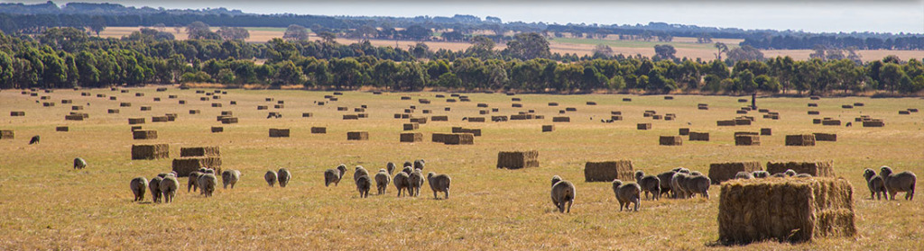 Glenthompson-banner-cropping-1024x279.jpg