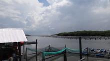 Alimento y Energía; la coexistencia entre pesca y petróleo en el Golfo de México