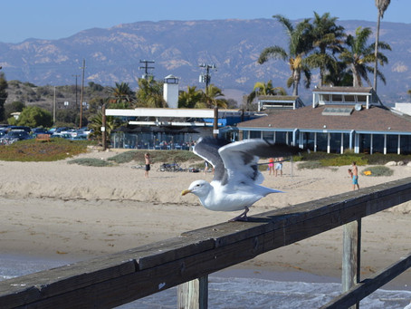 Beachside Bar-Cafe in Goleta Becomes Latest Business Casualty of COVID-19 Pandemic