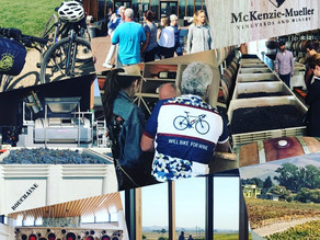 Bicycle Trips in Napa Harvest 2019