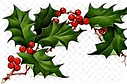 holly%25201_edited_edited.png