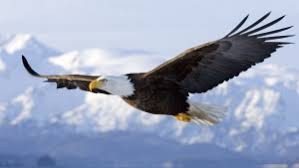 SOAR On Your Next Job Interview!