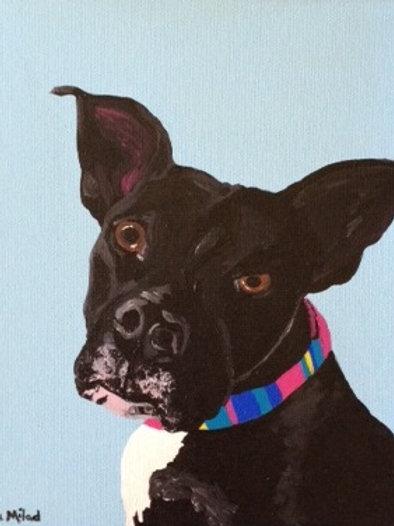 SINGLE Pet Portrait starting at $60