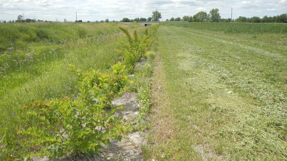 Bande riveraine située à Maskinongé. Elle est composée de chêne à gros fruits, de cornouiller stolonifère, de physocarpe à feuille d'obier et de sureau du Canada.