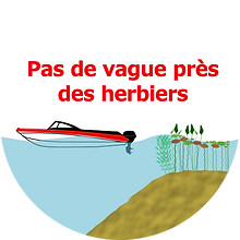 limite+_herbier_vague2.png